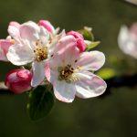 Le printemps à Caloire - Crédit photo ©Christon 2021